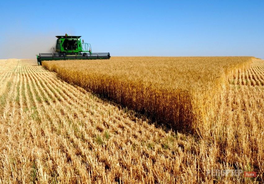 Депутат Кот продасть свою агрофірму власникові «Радехівського цукру»