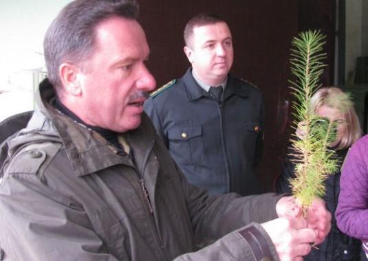 Експорт сіянців до Європи та відновлення лісів львівського краю